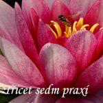 Třicet sedm praxí bódhisattvů